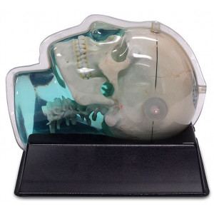 MR Distortion and Image Fusion Head Phantom