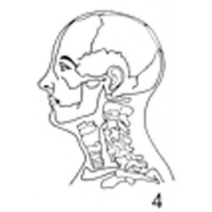 Anatomical Drawings, Left Lateral Head and Neck
