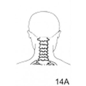 Anatomical Drawings, PA Cervical Spine