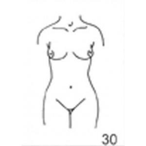 Anatomical Drawings, AP Female Torso