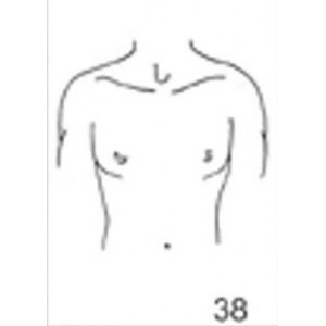 Anatomical Drawings, AP Upper Torso Male