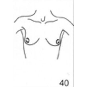 Anatomical Drawings, AP Upper Torso Female