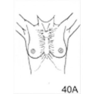 Anatomical Drawings, AP Upper Torso Female with Arms Up