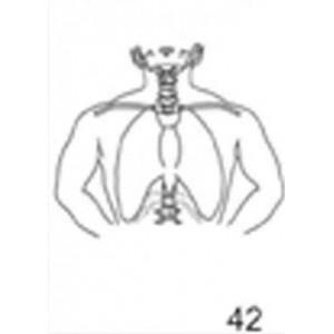 Anatomical Drawings, AP Mantle