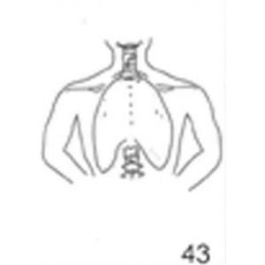 Anatomical Drawings, PA Mantle