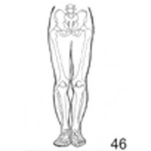 Anatomical Drawings, AP Lower Skeletal