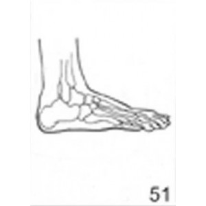 Anatomical Drawings, Right Lateral Foot