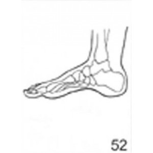 Anatomical Drawings, Right Medial Foot