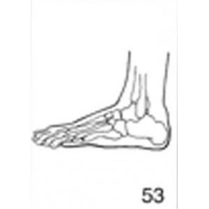 Anatomical Drawings, Left Lateral Foot