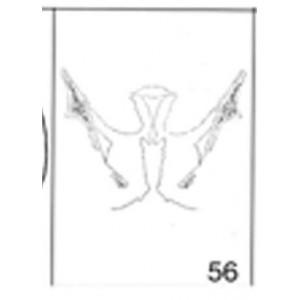 Anatomical Drawings, Female Pelvis