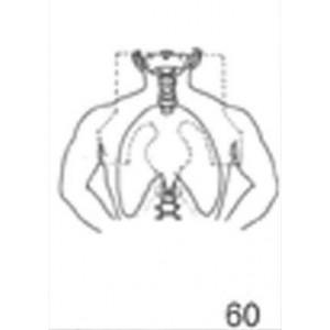 Anatomical Drawings, AP Mantle with Blocking