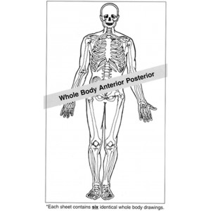 Anatomical Drawings, AP Whole Body