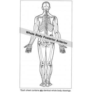 Anatomical Drawings, PA Whole Body