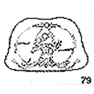 Anatomical Drawings, CT, 5th Thoracic Vertebra